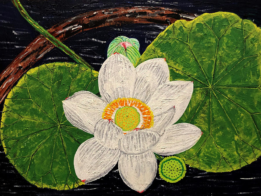 Lotus Painting - Lotus by Far I Shields