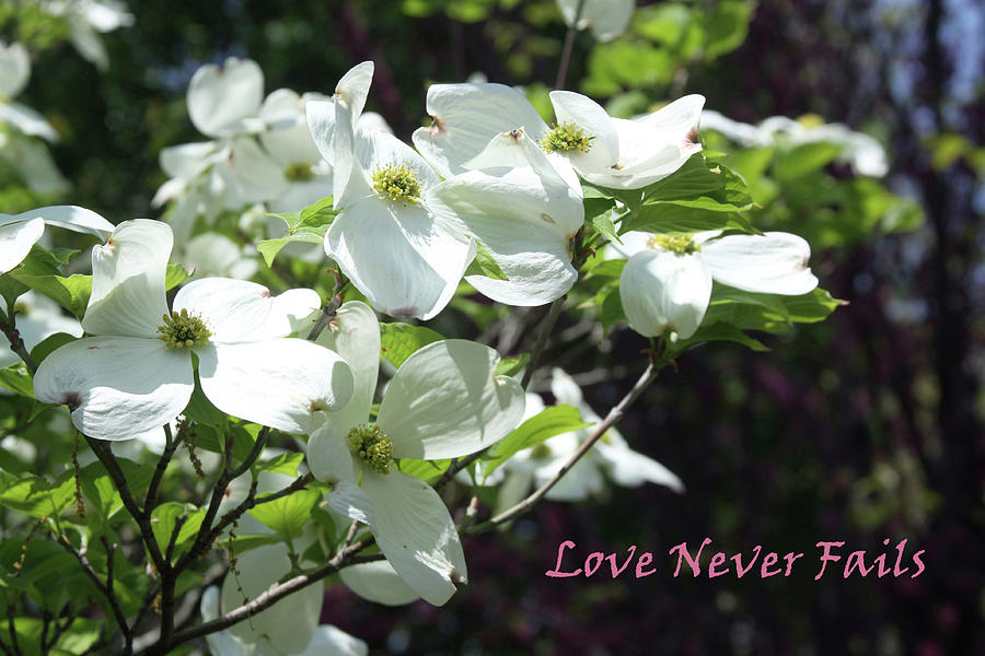 Flowers Photograph - Love Never Fails by John Lautermilch