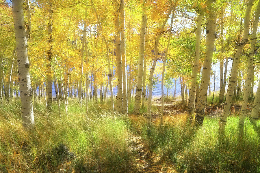 Fishlake National Forest Photograph - Lovin Autumn by Donna Kennedy