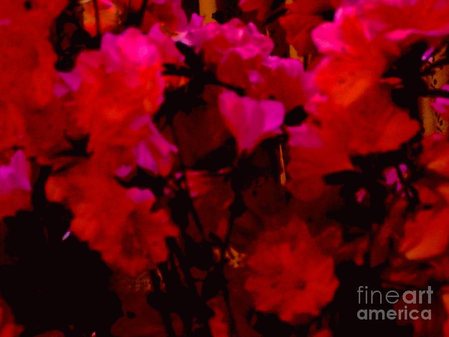 lovin hot REDS Mixed Media