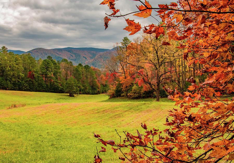 Loving Those Leaves by Marcy Wielfaert