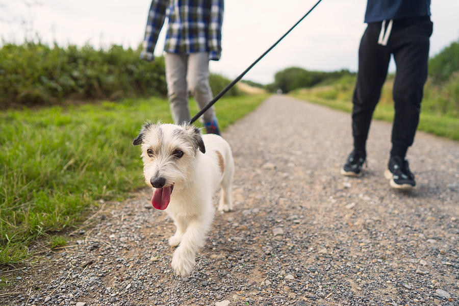 Low angle view of a small dog being walked by his family in a  park Photograph by Christopher Hopefitch