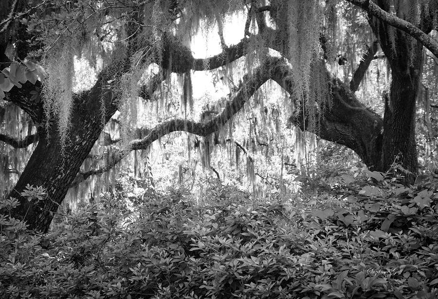 Lowcountry Dreaming - Black And White Photograph