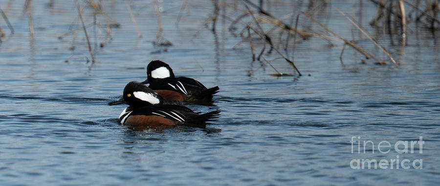 Lowcountry Sportsman - Duck Hunting - Wando River Photograph