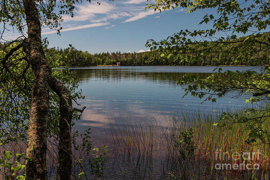 Lower Hadlock Pond Acadia National Park Photograph