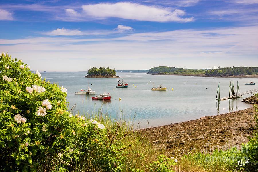 Lubec Harbor Photograph
