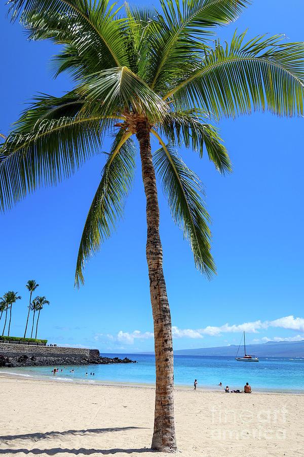Lucky Palm Photograph