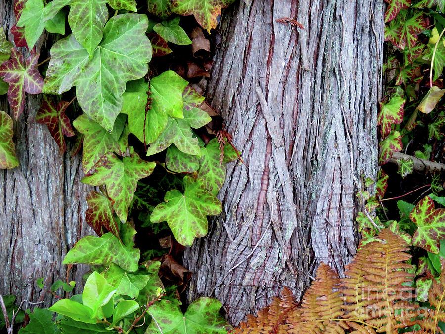 Luscious Growth Photograph