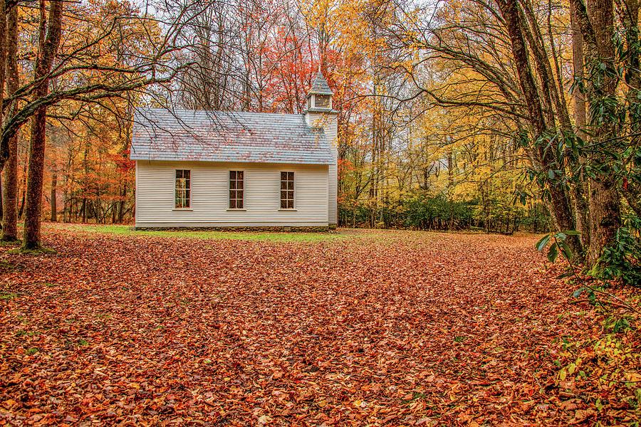 Lush Carpet of Leaves in Cataloochee by Marcy Wielfaert
