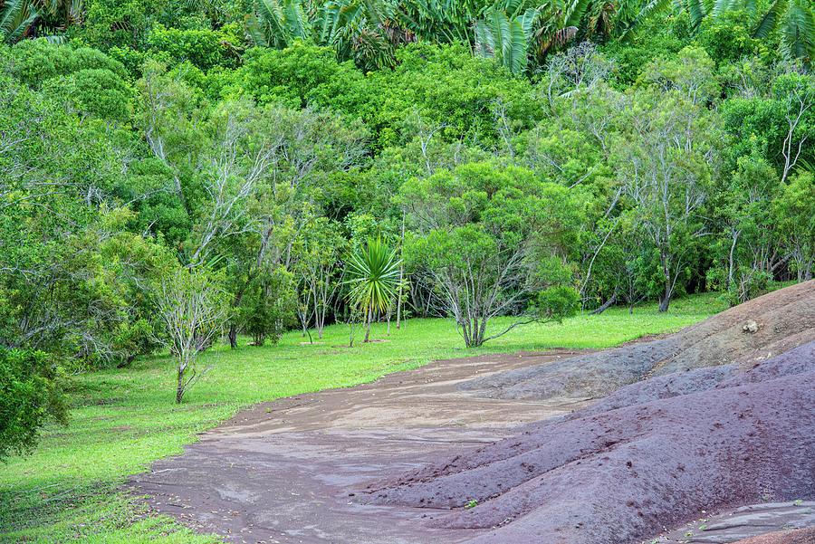 Lush Foliage In Mauritius Photograph
