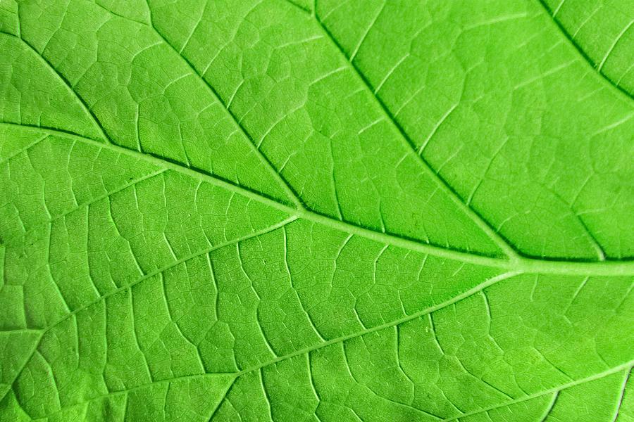 Macro Green Leaf Ecology Plant Background Photograph