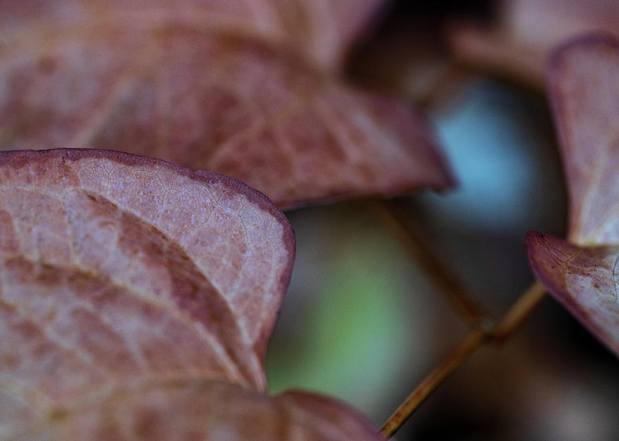 Macro Photography - Leaves by Amelia Pearn