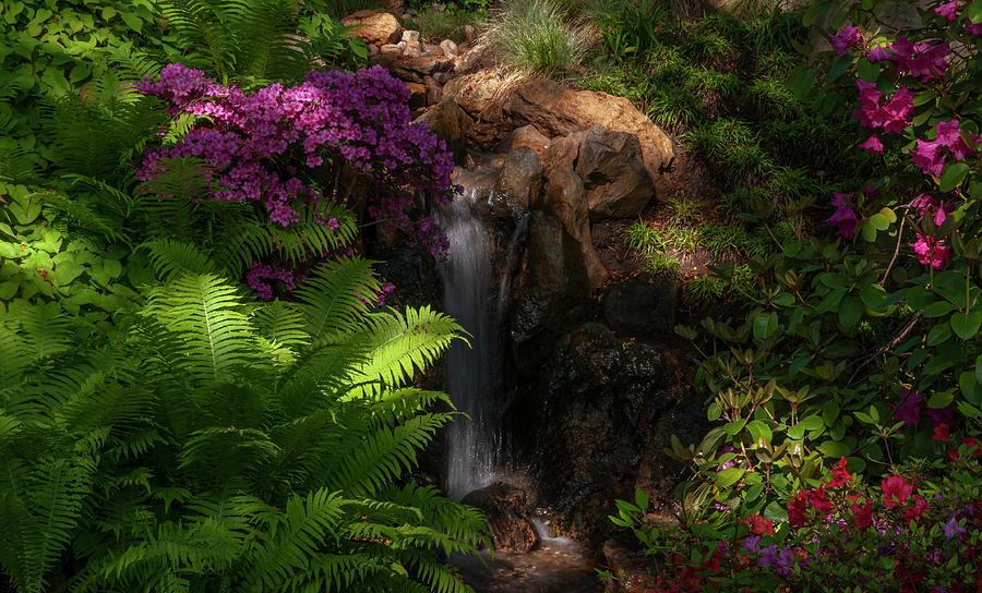 Magic Corner Of Japanese Garden 1 Photograph