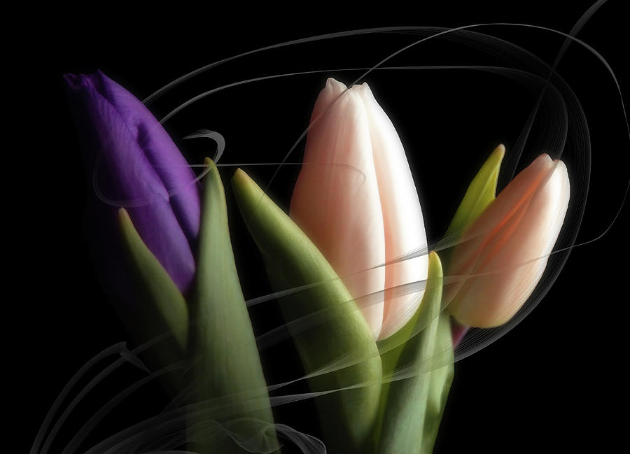 Magical Evening Tulips Mixed Media