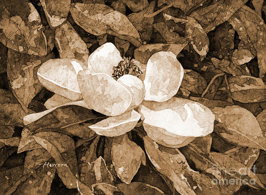 Magnolia Blossom In Sepia Tone Painting
