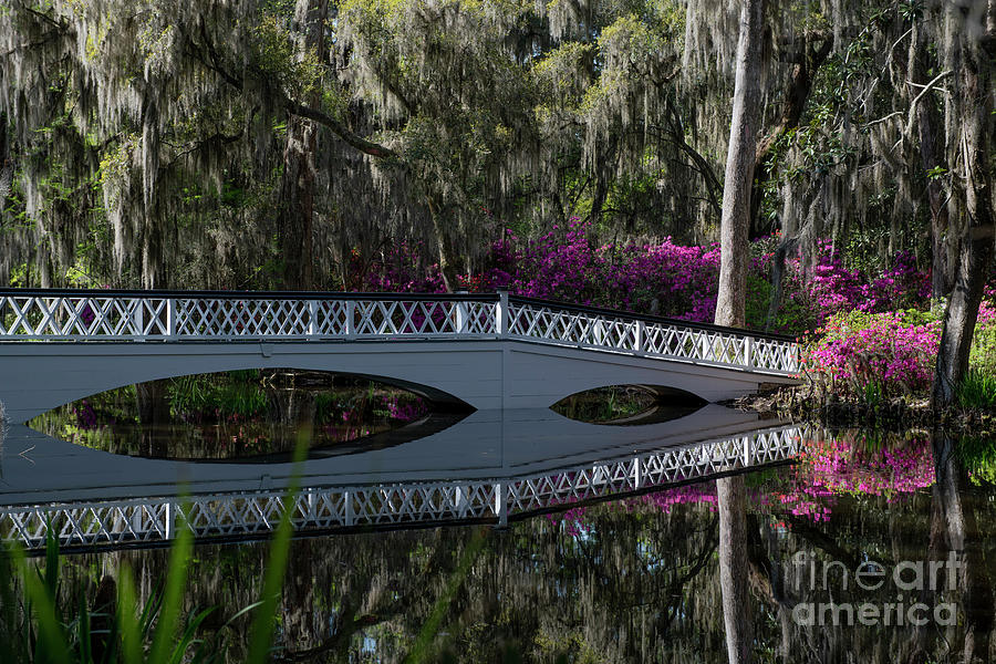 Magnolia Plantation Bridge - Charleston South Carolina Photograph