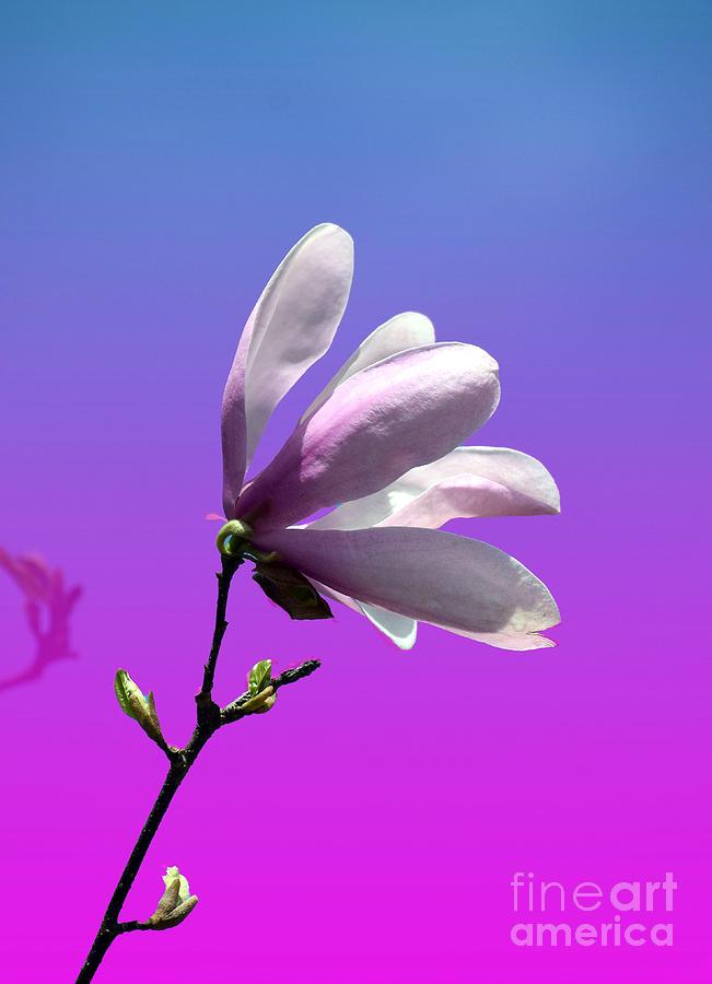 Magnolia Shades by Patti Whitten