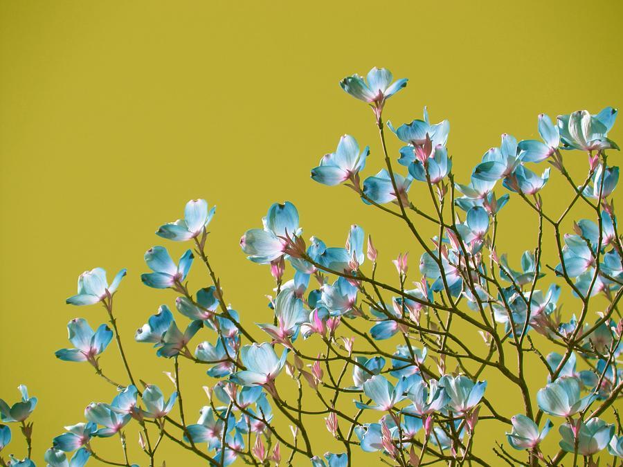Magnolia Tree - Surreal Sky Photograph