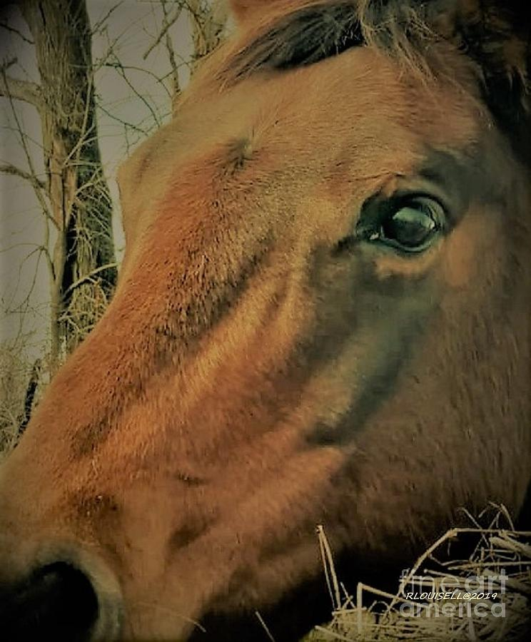 Horse Photograph - Mags Pie by Robyn Louisell