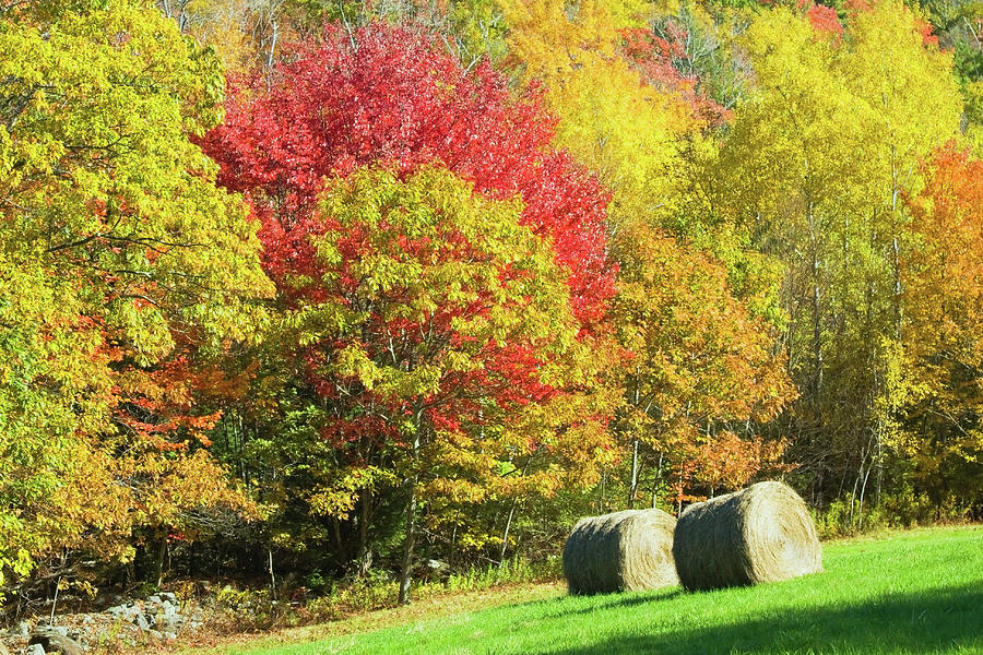 Maine Hay Bales In Fall Photograph