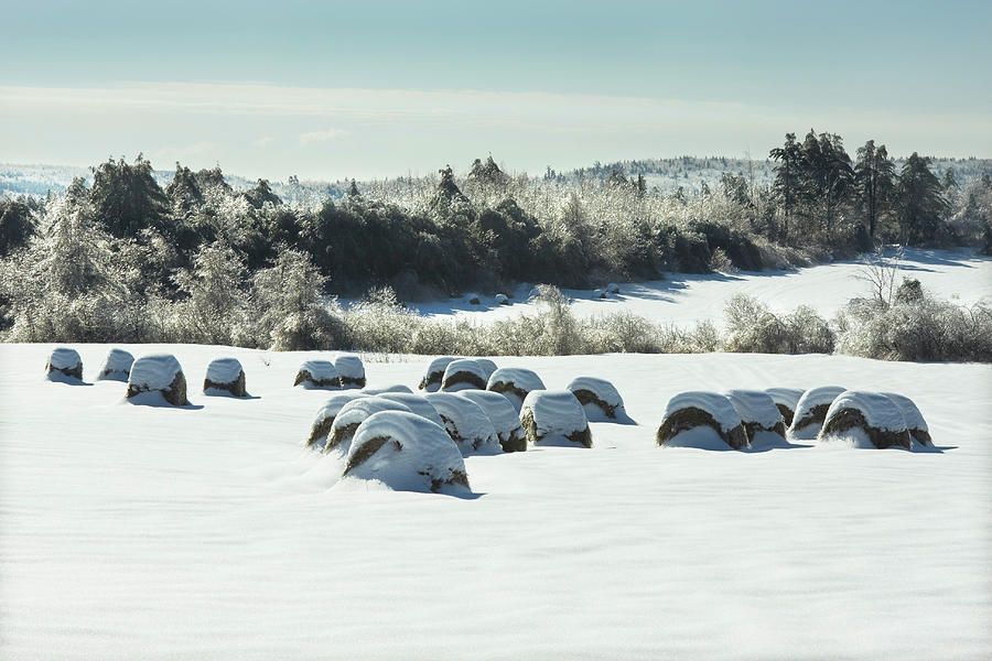 Maine Hay Bales In Winter Photograph