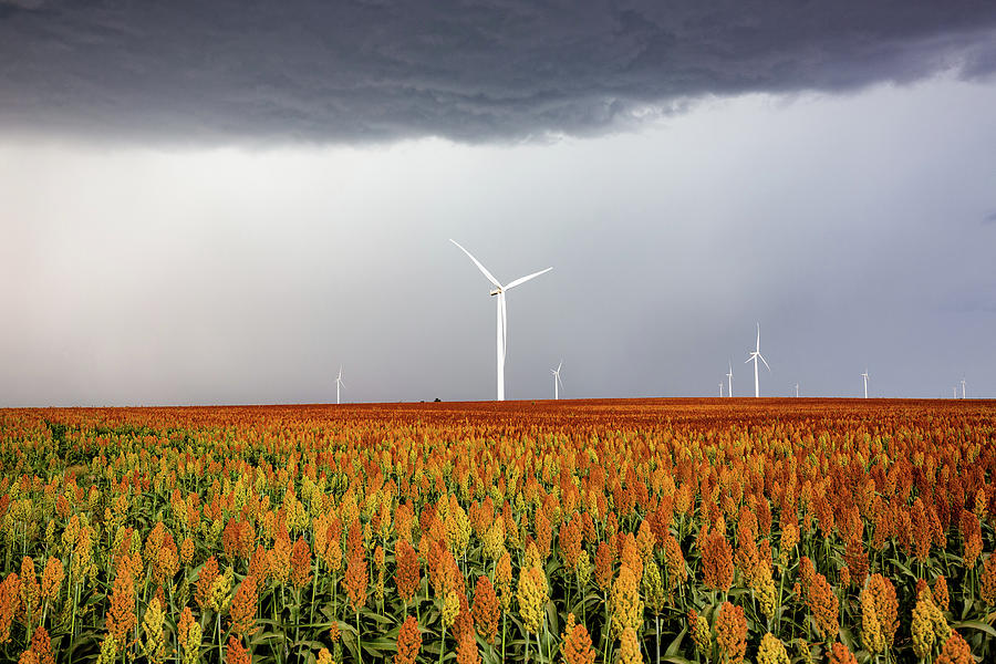 Maizy Day - Colorful Maize And Wind Turbines In Kansas Photograph