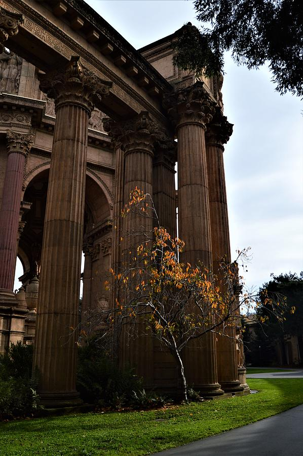 Majestic Columns by Warren Thompson