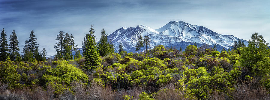 Majestic Mount Shasta In Color Photograph