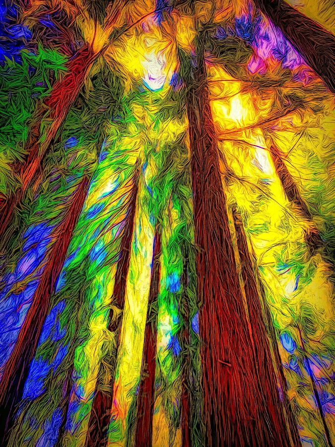 Majesty Of The Redwoods Photograph
