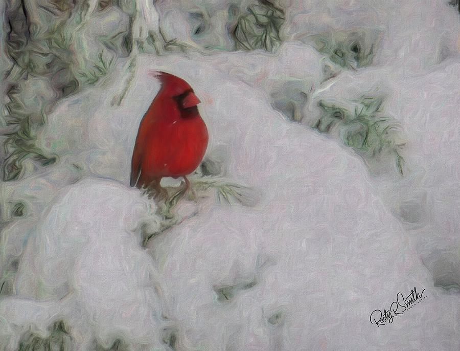 Male Cardinal perching on snow covered juniper branch. by Rusty R Smith