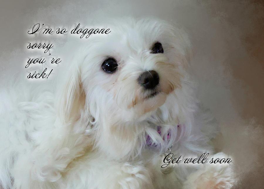 Maltese Dog Get Well Soon Greeting Card Photograph