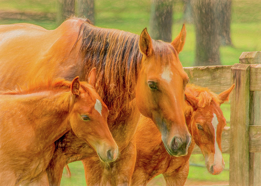 Mama and the Twins in  Pasture by Marcy Wielfaert