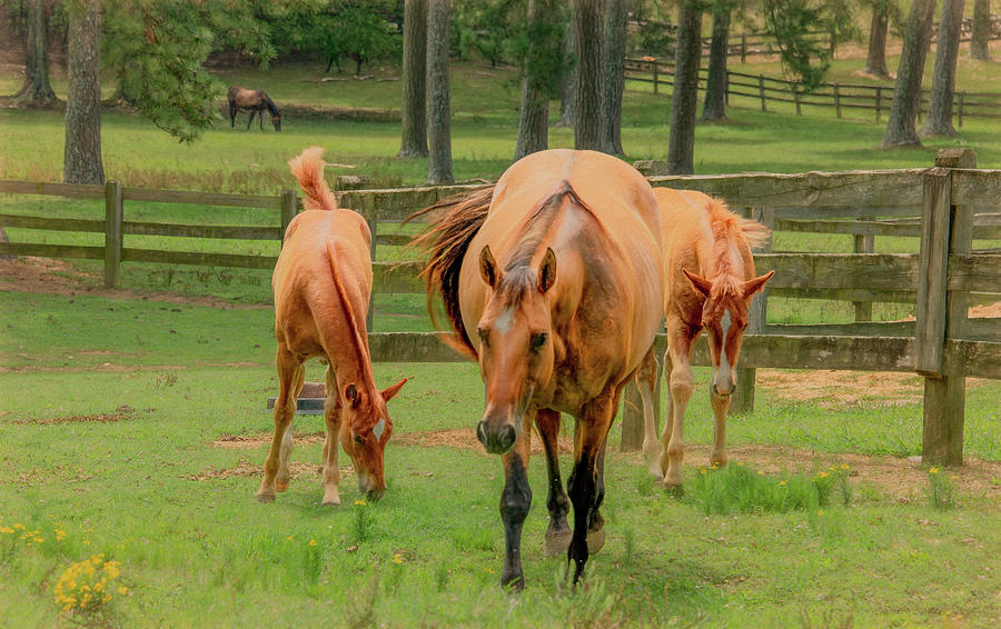Mama Mare and Her Twins by Marcy Wielfaert
