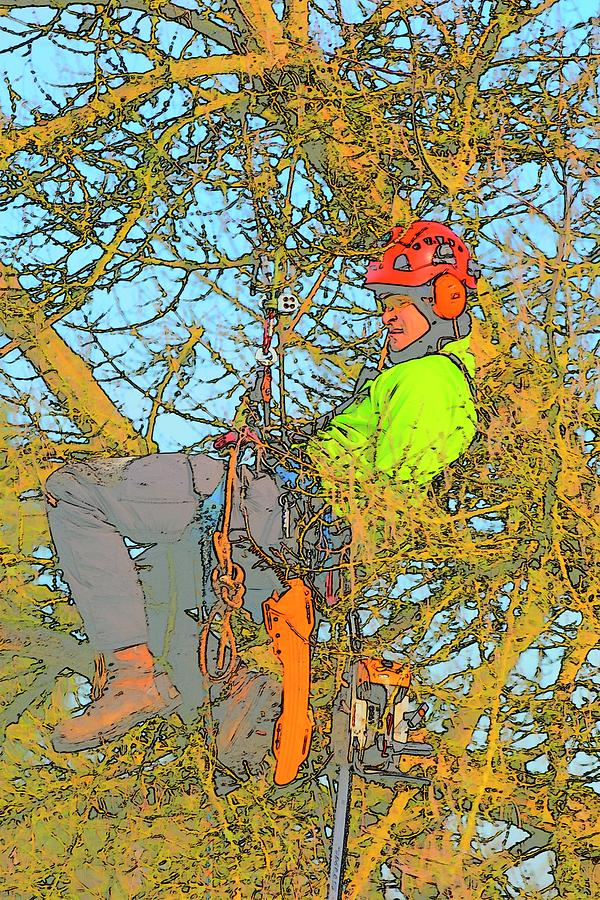 Man Amongst Tree Photograph