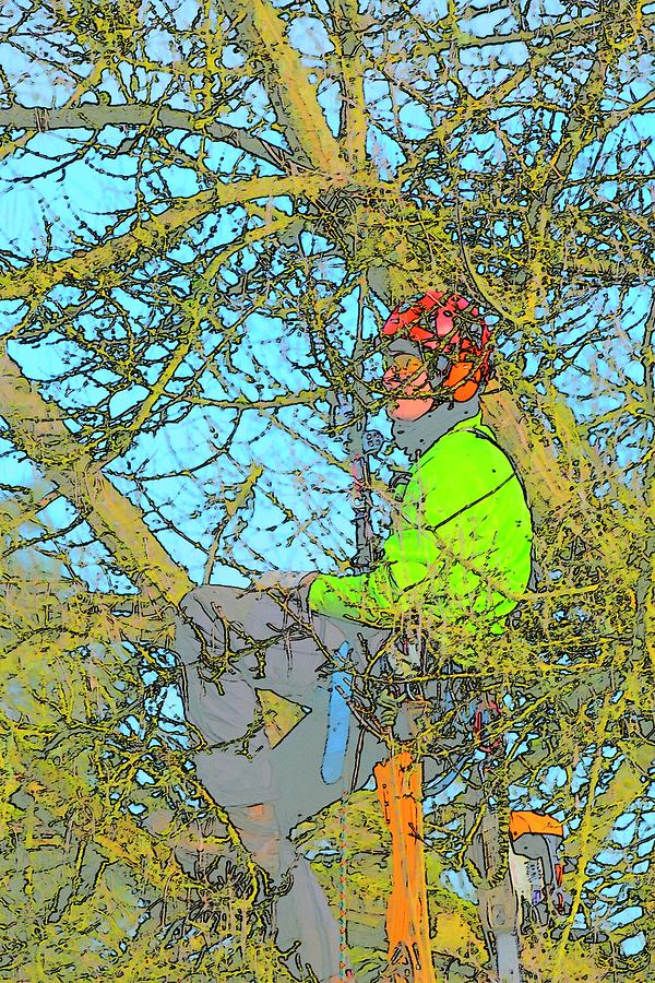 Man Resting In Tree Photograph