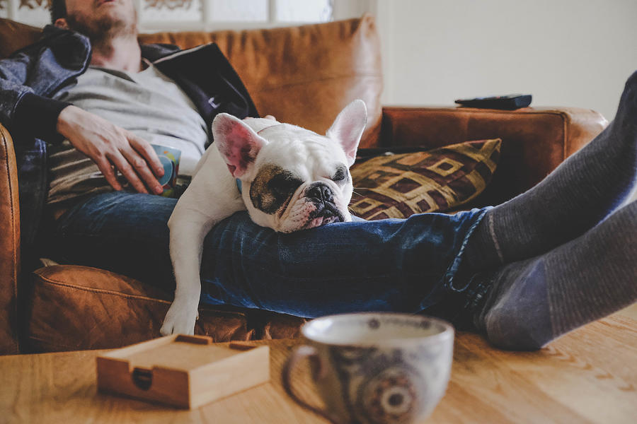 Man spending a lazy afternoon with his dog, a French Bulldog Photograph by Gollykim
