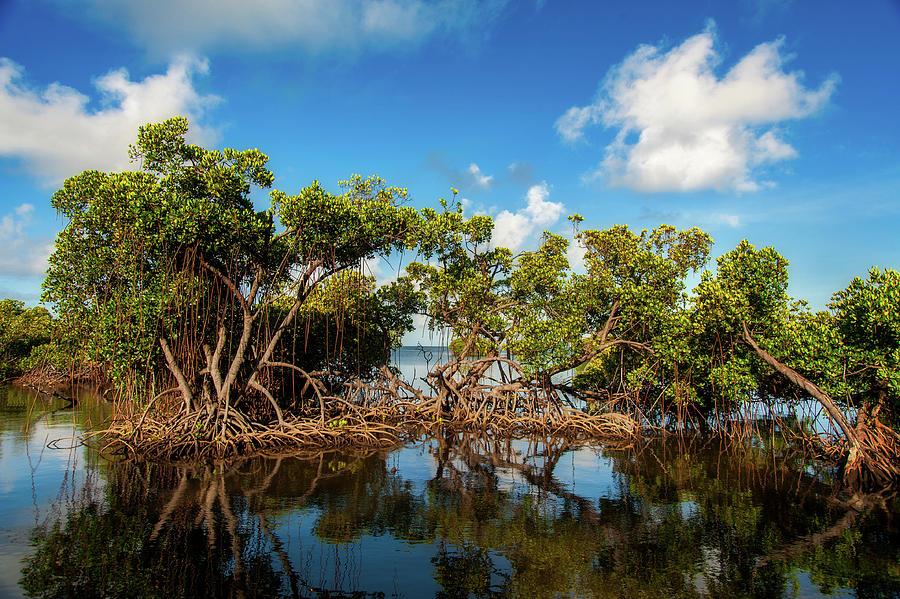Mangroves Photograph
