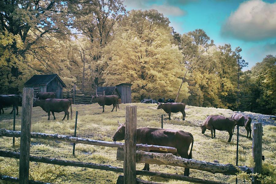 Maple Breeze Farm - Westbrook, Ct Photograph
