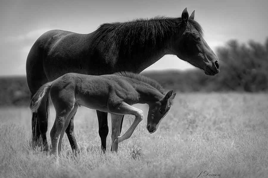 Mare and Colt by Jonathan Davison