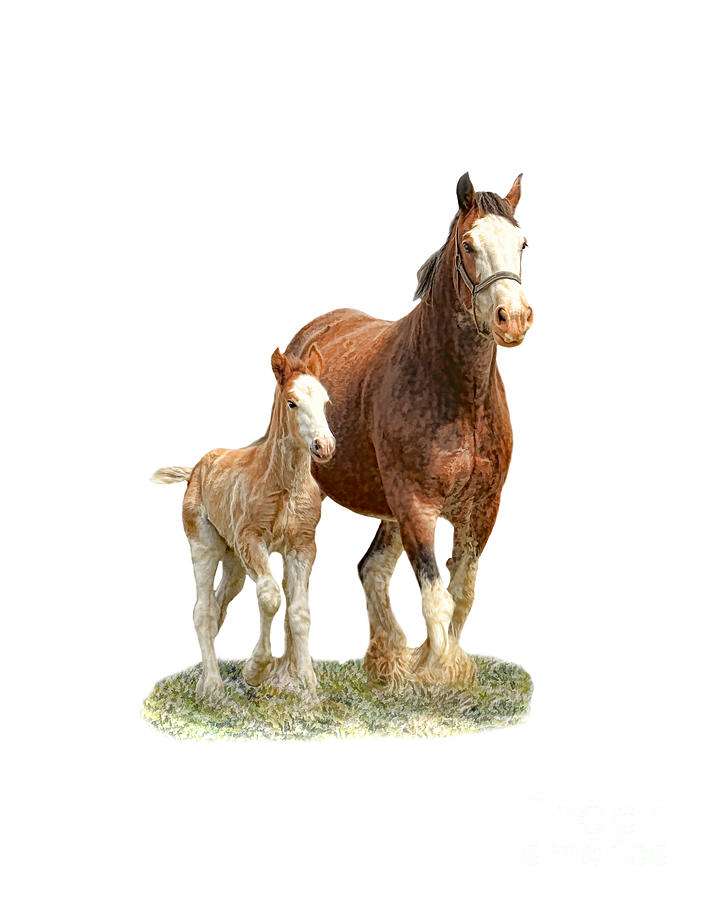Mare And Foal Digital Art
