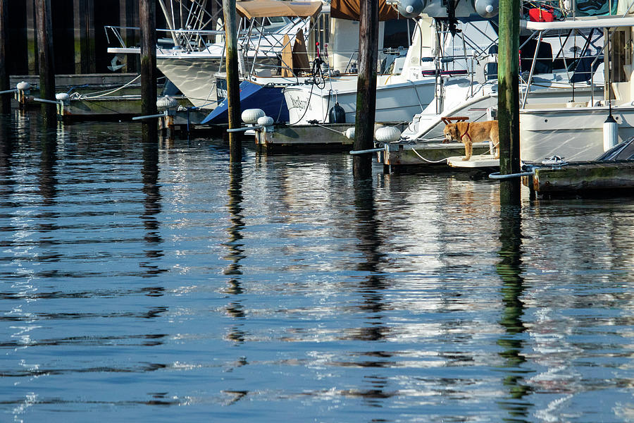 Marina Reflections Photograph