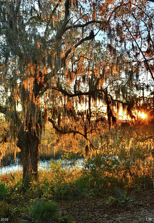 Marsh Sunrise Vertical by Lisa Wooten