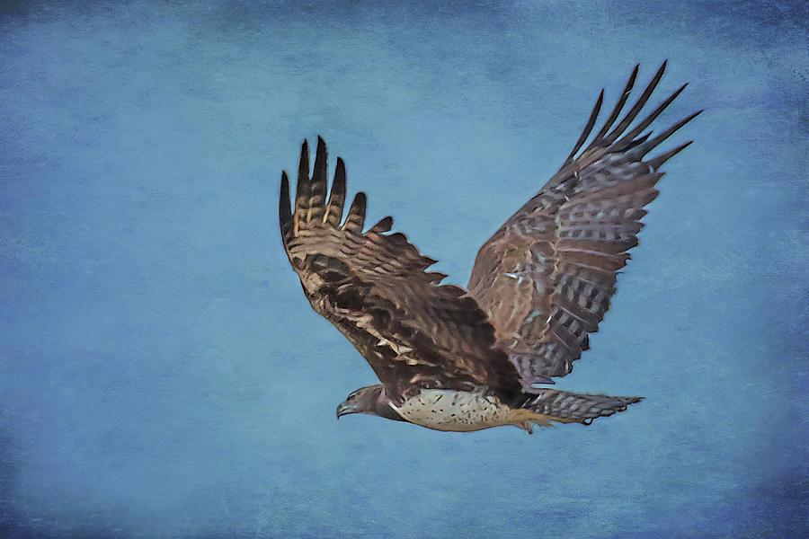 Martial Eagle by Belinda Greb