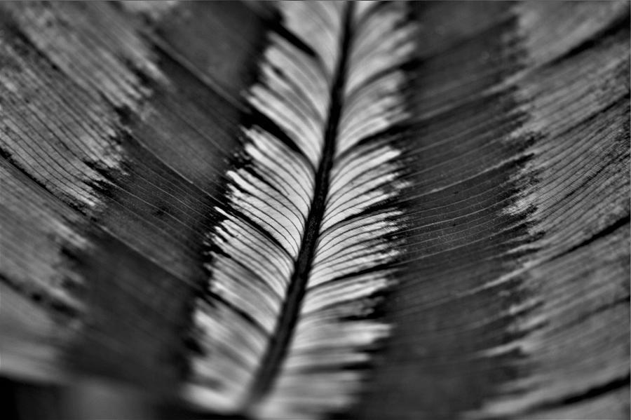 Masquerading As A Feather Photograph