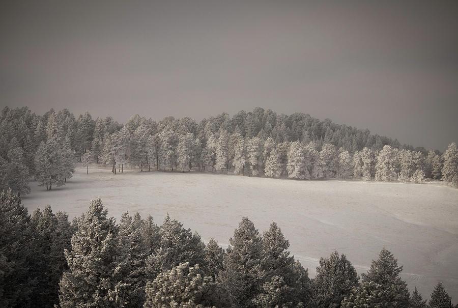 Mountain Meadow in Winter  by Kevin Schwalbe
