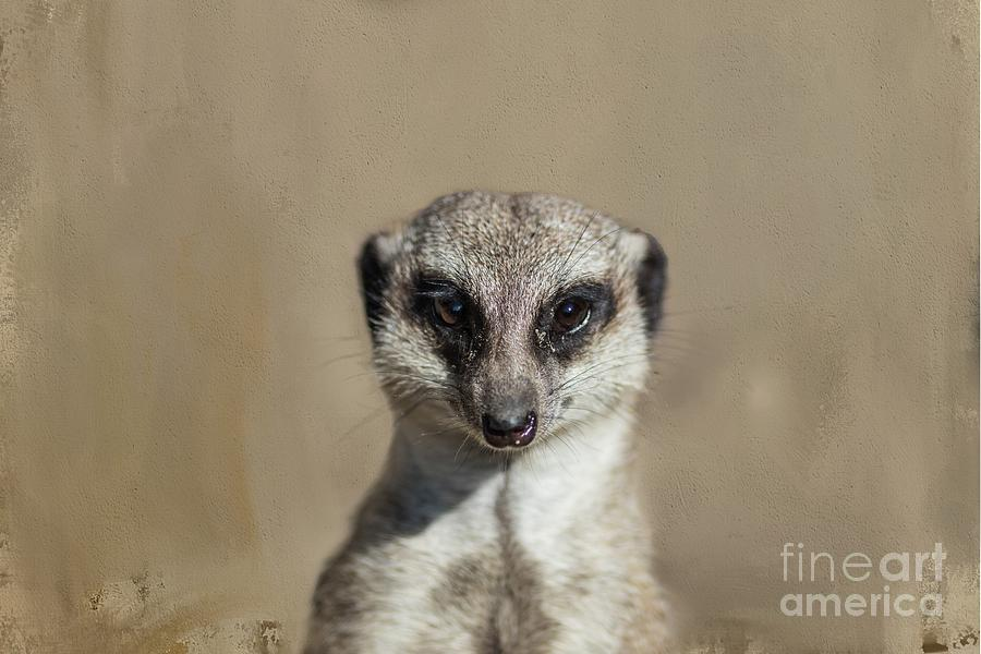 Meerkat Portrait-2 by Eva Lechner