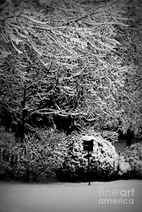 Winter Photograph - Mercy - Black and White by Frank J Casella