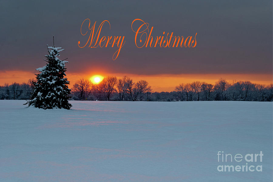 Merry Christmas - Lonely Tree by Len Tauro