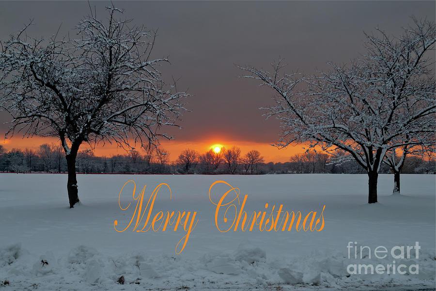 Merry Christmas- Tree Pair by Len Tauro