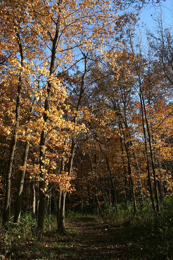 Merwin Trail Autumn Light by Dylan Punke